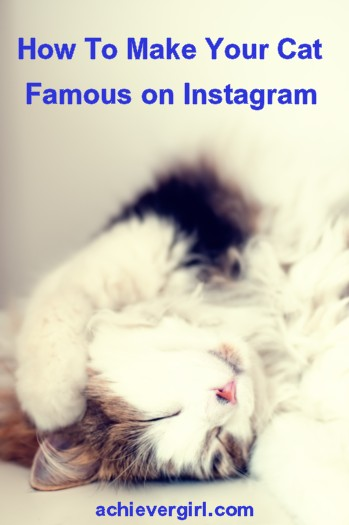 Making Your Cat Famous On Instagram Is Easier Than You Think - Venus cat two faces making twice adorable